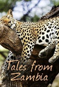 Tales From Zambia